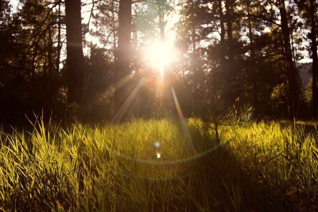 promienie słońca przebijające się przez las