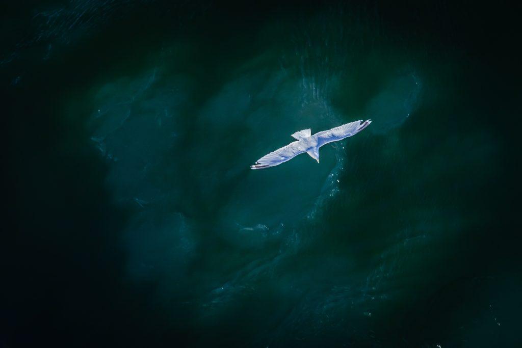 lecący ptak nad oceanem